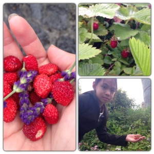 Wild strawberries and lavender from the garden